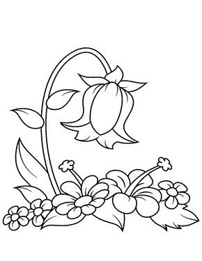 Ausmalbild Glockenblume Blumen Ausmalbilder Ausmalbilder Malvorlagen Blumen
