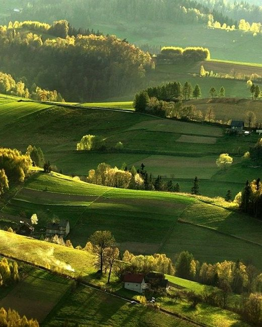 The smell of Spring # Beskid Sadecki # Poland