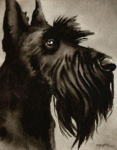 SCOTTISH TERRIER Watercolor Dog ART Signed Artist DJR