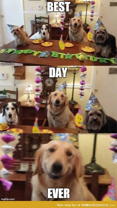 Best Day Ever Funsubstance Funny Animals Animal Captions Animals
