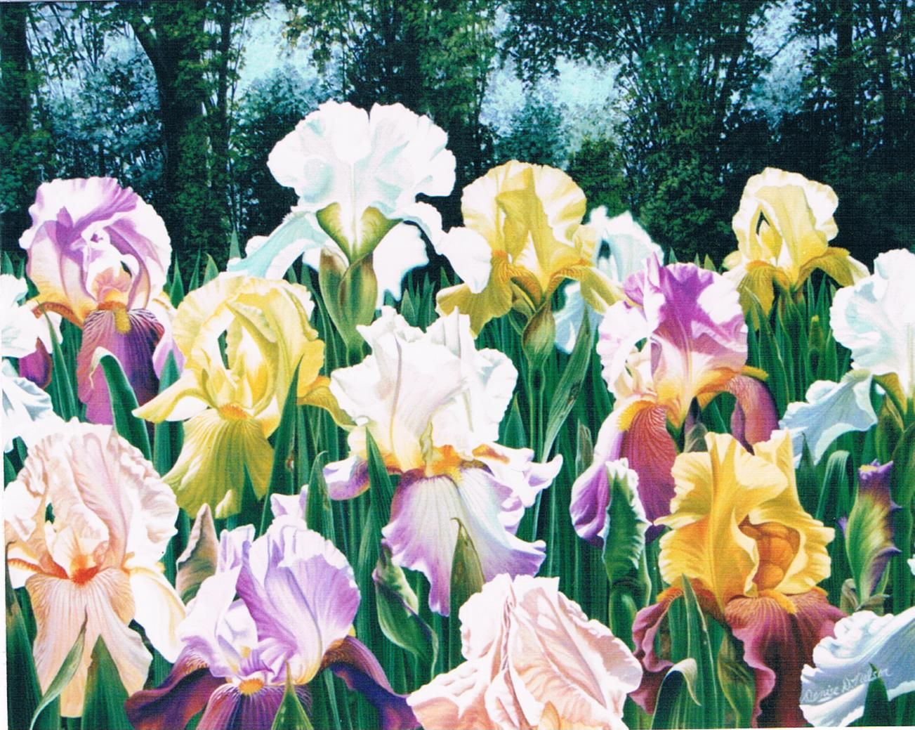 Irises-Genesis-on-Panel2.jpg (1303×1039)