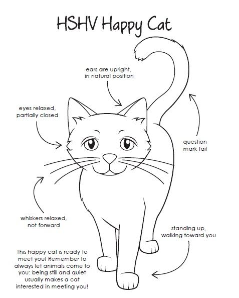A Coloring Page That Teaches Children About Safe Cat Body Language Humane Education Cat Body Happy Cat