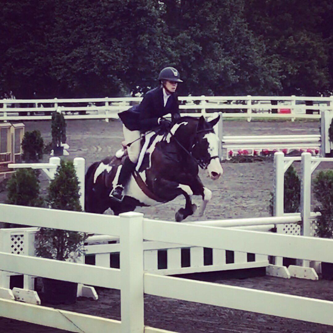 Canadian Sport Horse in 2020 Sport horse, Horses, Horse