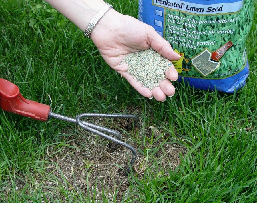 Fill in thin and bare patches with new grass seed to head