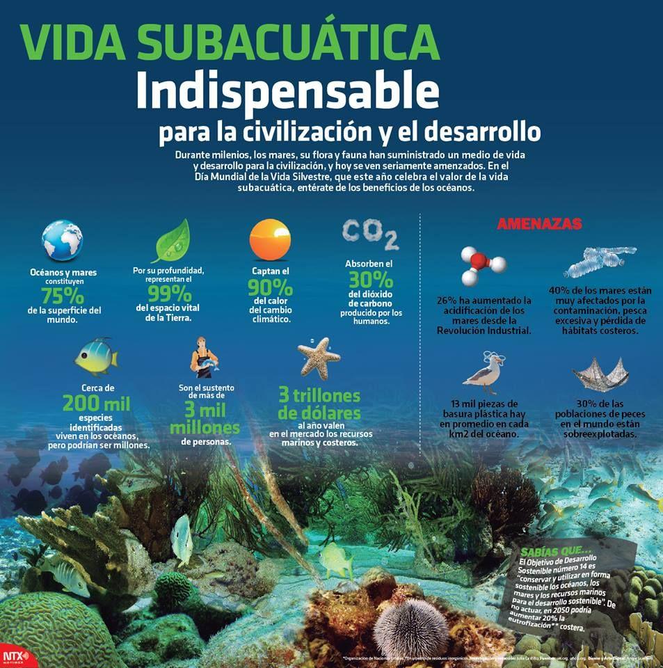 Vida Subacuática Cambio Climatico Canciones De Niños Climatico