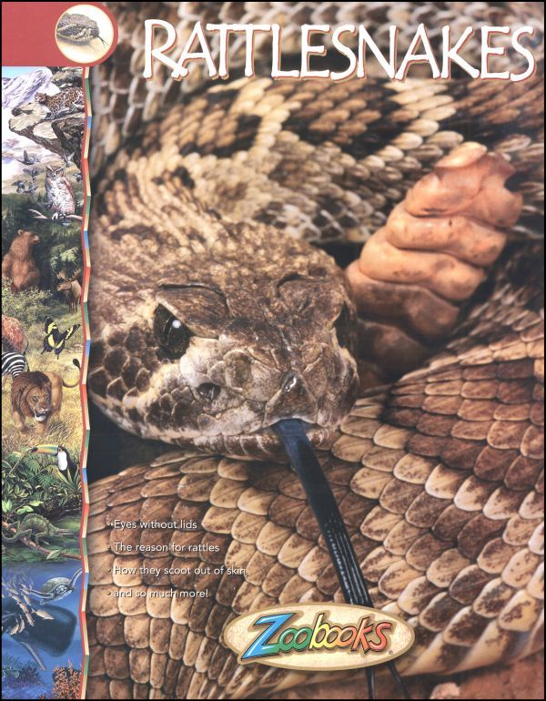 Rattlesnakes Zoobook | Main photo (Cover)