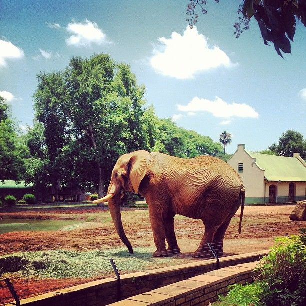 The National Zoological Gardens Of South Africa
