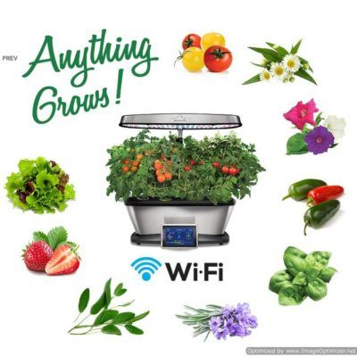 Best Things To Grow In Aerogarden With Images 400 x 300