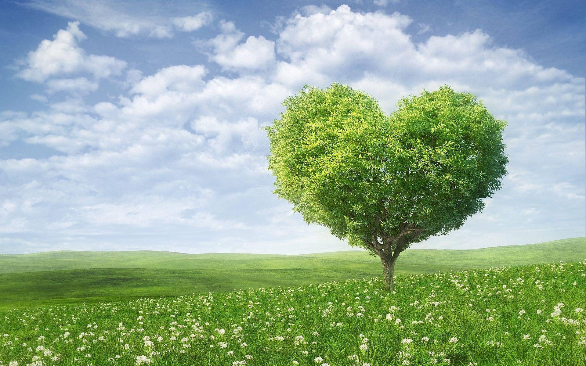 Wallpaper Green Tree, Love Heart, Petals, Poppies, Heaven, HD ...