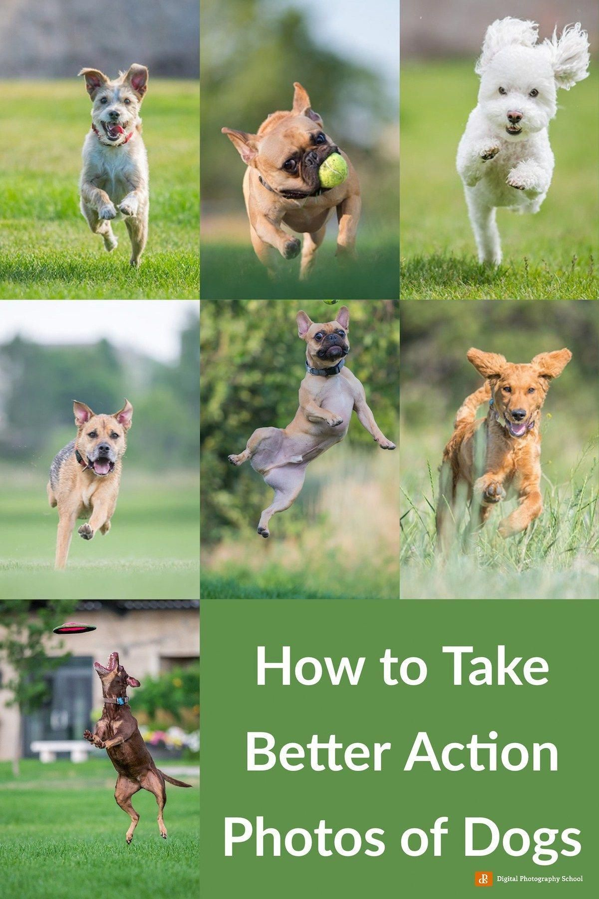 How to Take Better Action Photos of Dogs -  Unwieldy Dslr Photography Tips Photographers #dslrofficial #PhotographyGearPhotoTips  - #