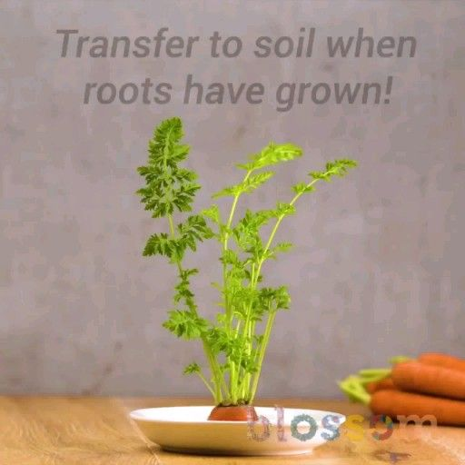 Photo of Grow your own plants 🌱 plant hacks!