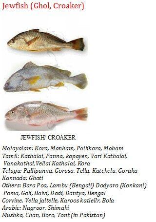 Pin On Fish Glossary
