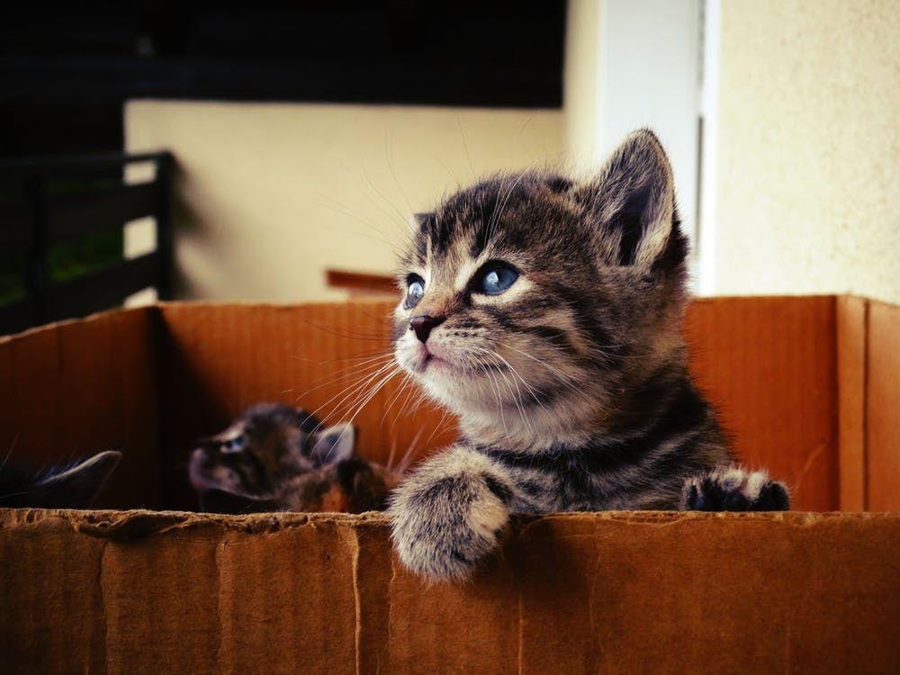 Du willst eine Katze kaufen? Mit dieser Anleitung findest