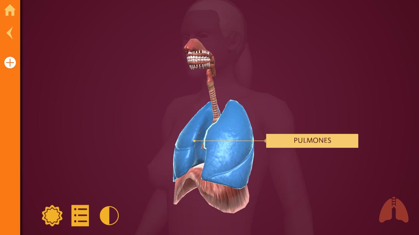 Anatomy: El Cuerpo Humano, aprende anatomía con esta completa ...