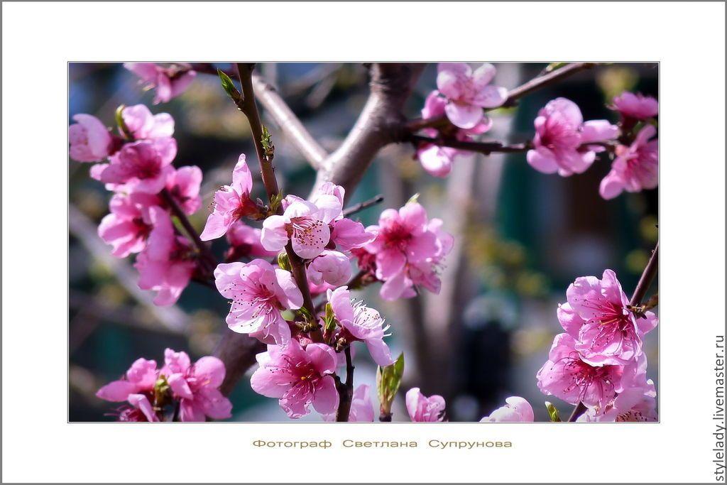 Купить ОДА РАДОСТИ ... ( авторская фотокартина для интерьера) - разноцветный, весна, фотография авторская