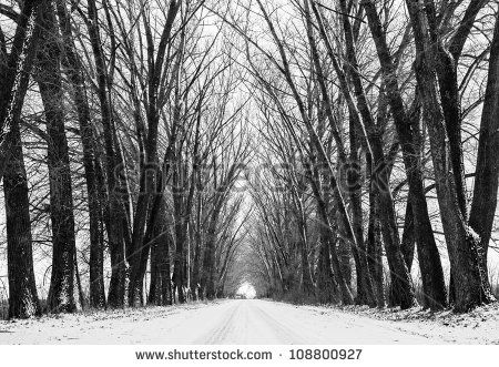 What If Two Roads Are Illusion What If >> Two Parallel Rows Of Trees Create An Illusion Of An Arch Tunnel