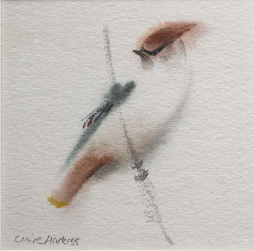 """""""Waxwing"""" - Watercolor by Claire Harkess"""