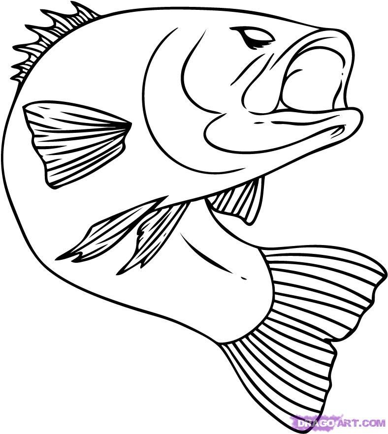 Fish Pictures To Color How To Draw A Bass Step By Step Fish