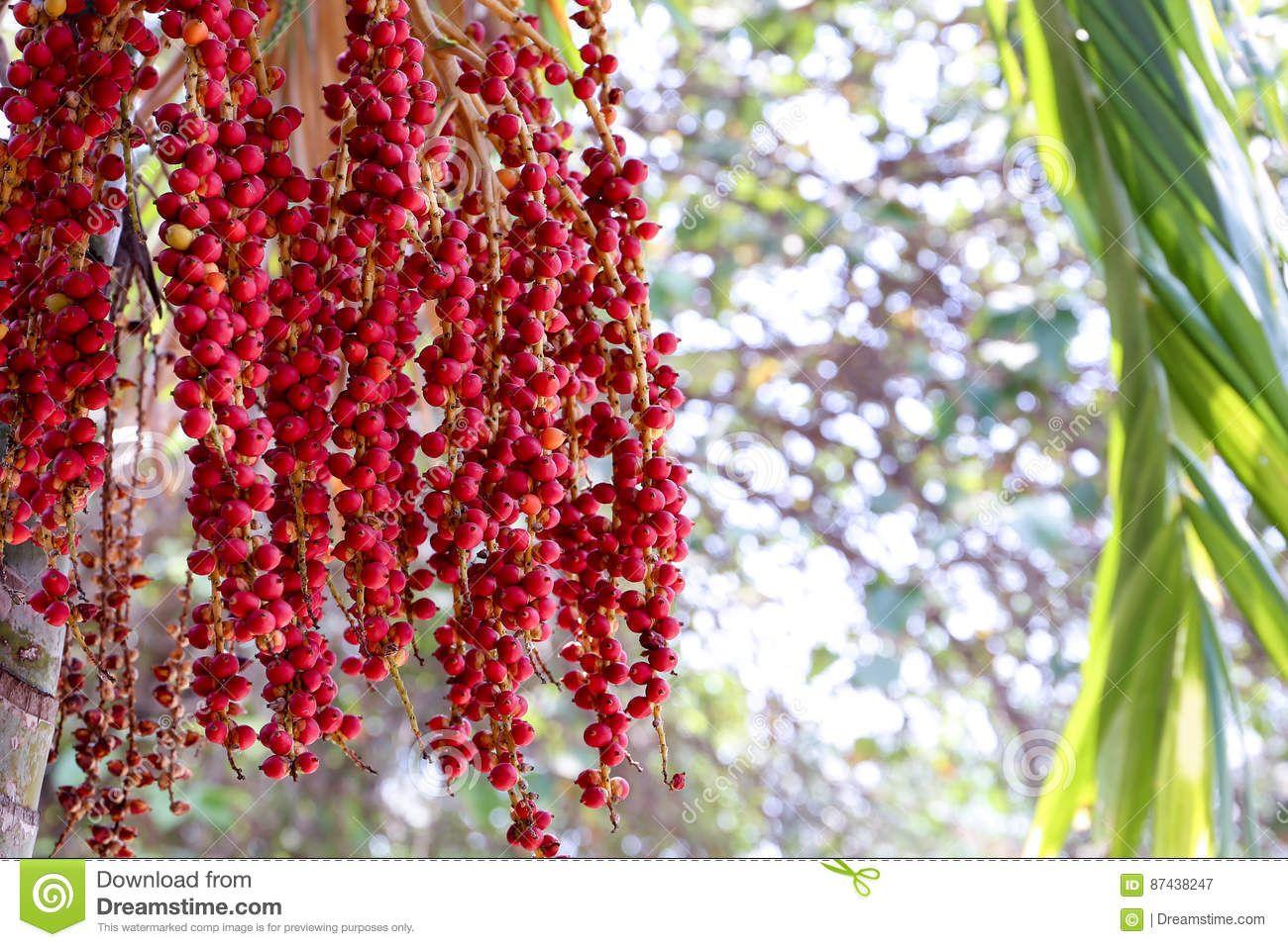 Épinglé sur belles Plantes