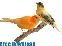 تحميل صوت عصافير mp3