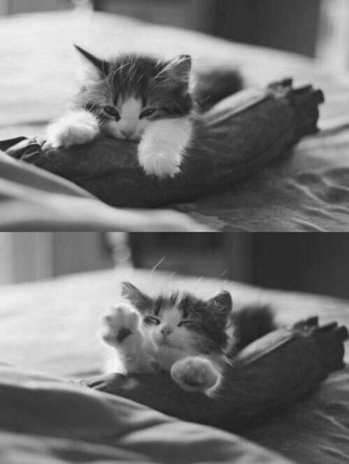 Sleeeepy kitttty