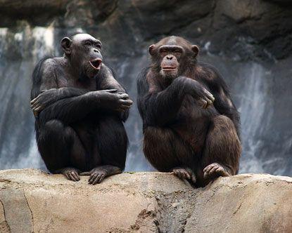 La Zoo Los Angeles Zoo Zoo Bonobos