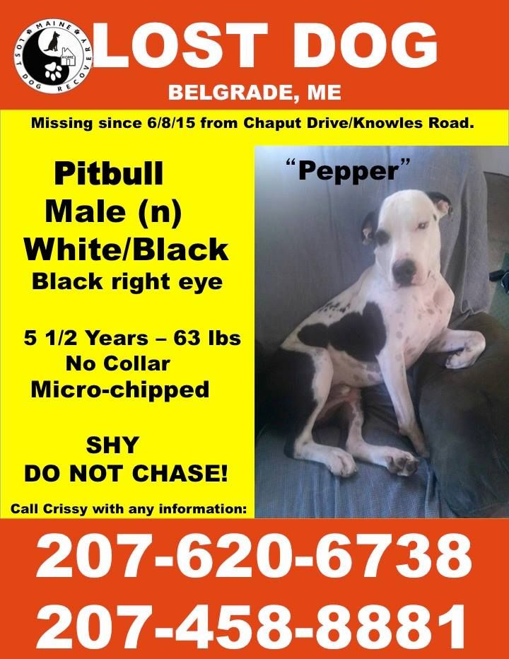 Maine Lost Dog Recovery June 12 · 6/12/15 PEPPER IS