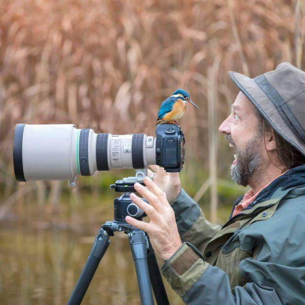 Фото птиц украины с названиями этому