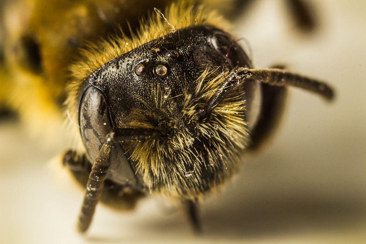 Makro Insect / © Tim Münnig