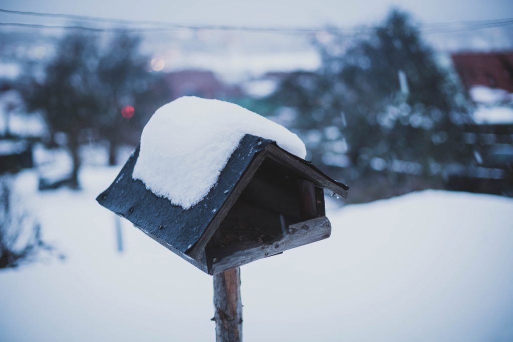 Wintergrillen  Winter, Wintergrillen, Grillen