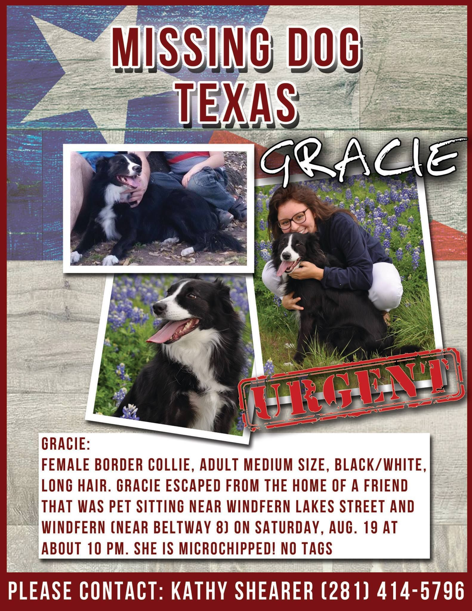 Lost Harvey Animal Missing Found Pet Urgent Losing A Pet Find Pets Pets