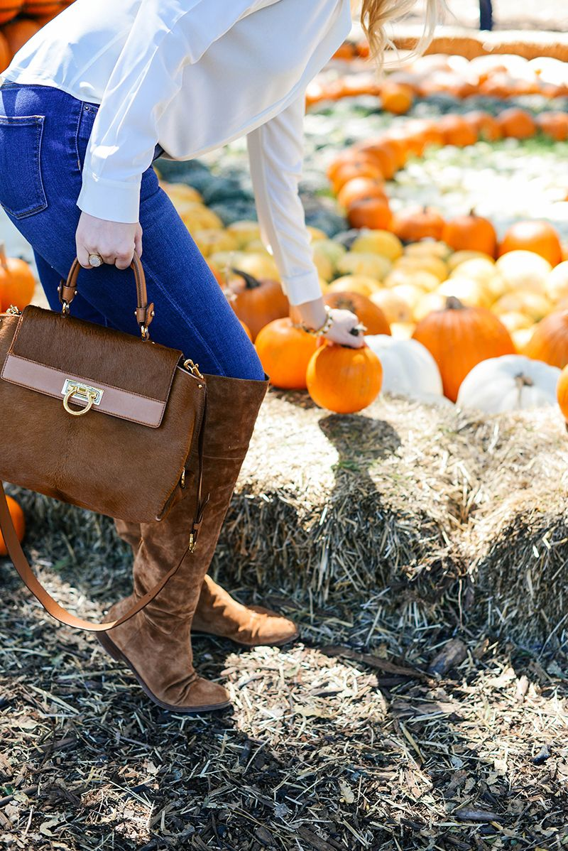 Pumpkin village the style scribe holiday pinterest scribe
