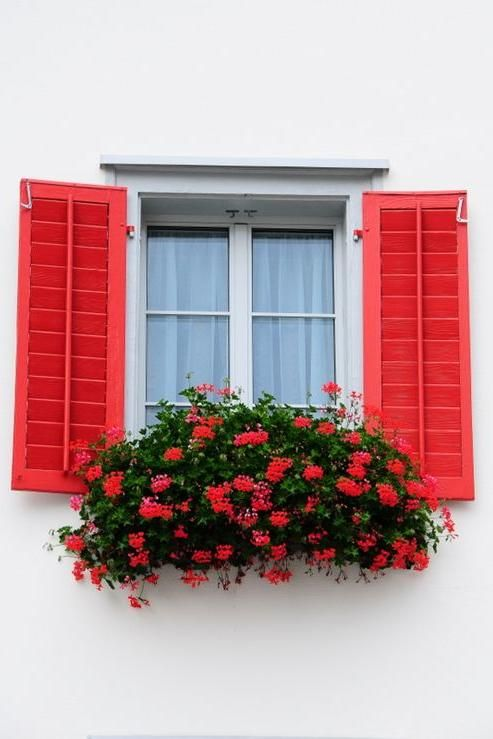 Photo of Bright and Colorful Shutters That Add Instant Curb Appeal