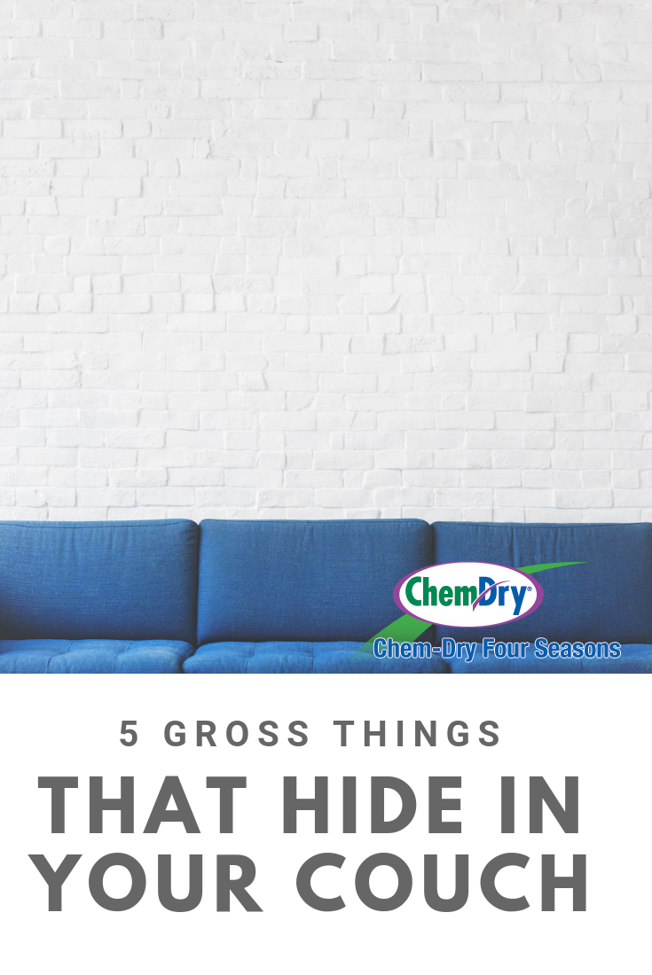 Couch Gross 5 Gross Things That Hide In Your Couch Blog Upholstery