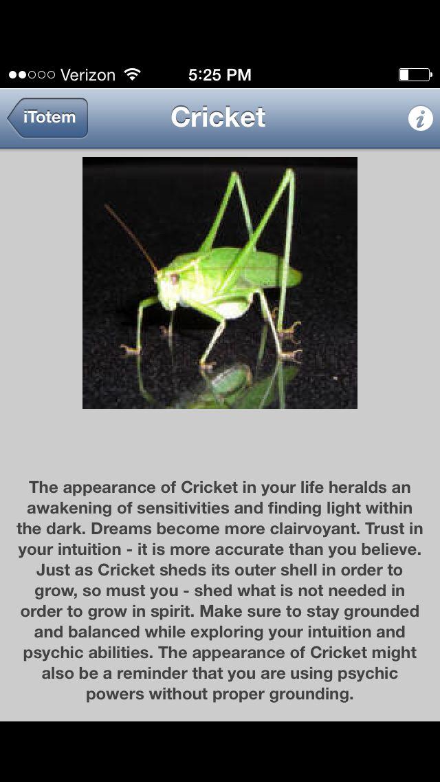 Cricket Totem Animal Totem Spirit Guides Animal Spirit Guides Spirit Guides
