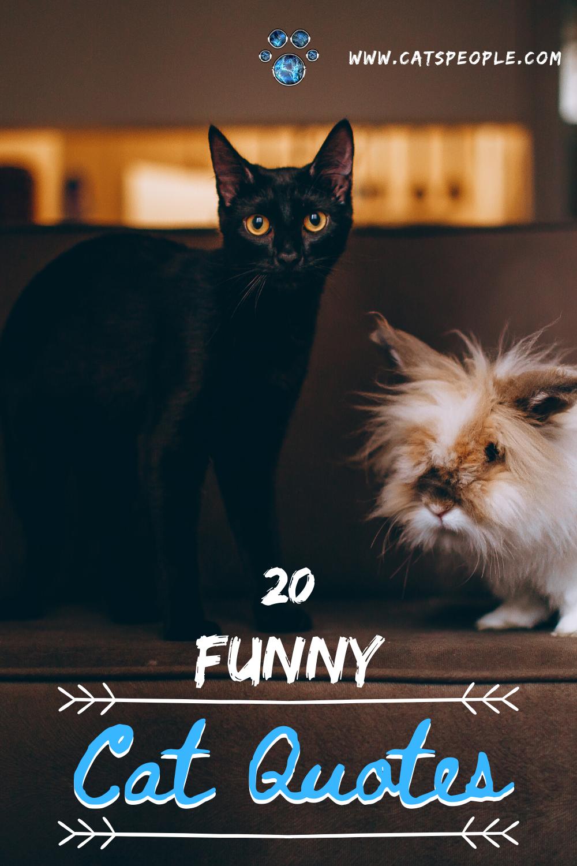 20 Funny Cat Quotes In 2020 Cat Quotes Funny Cat Quotes Cat Parenting