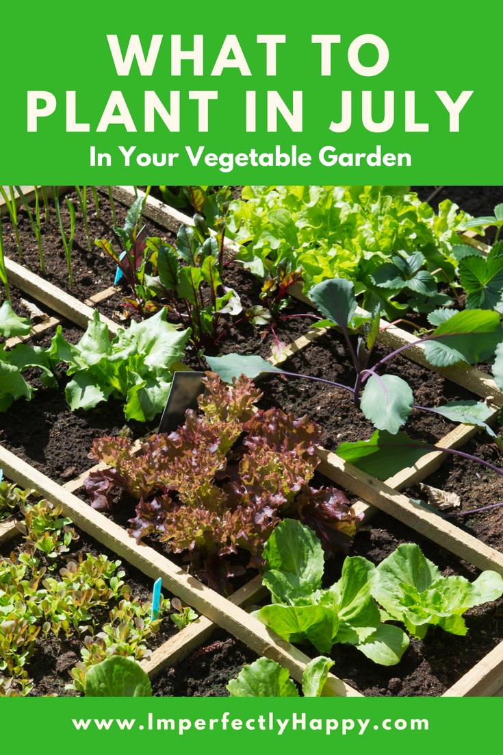 What To Plant In July In Your Vegetable Garden Now Home 400 x 300