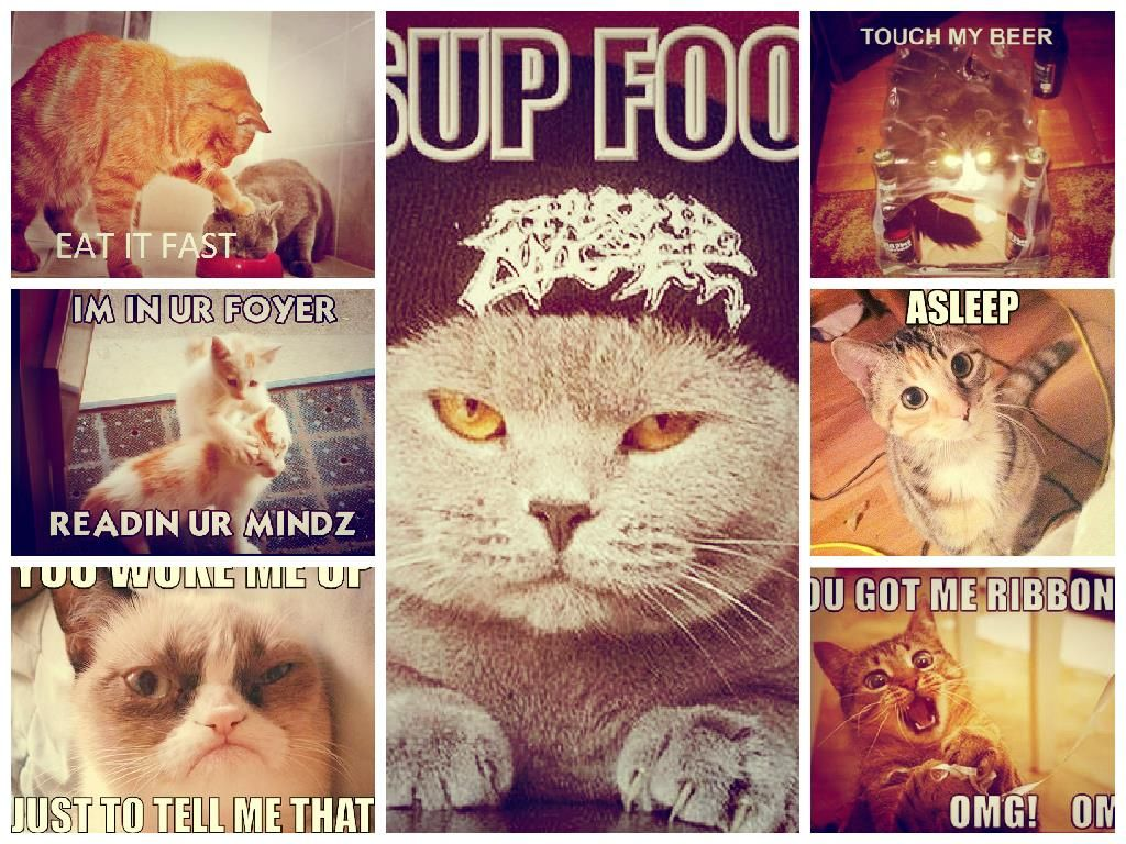 FunnyImage of cat with Captions Funny Images Funny
