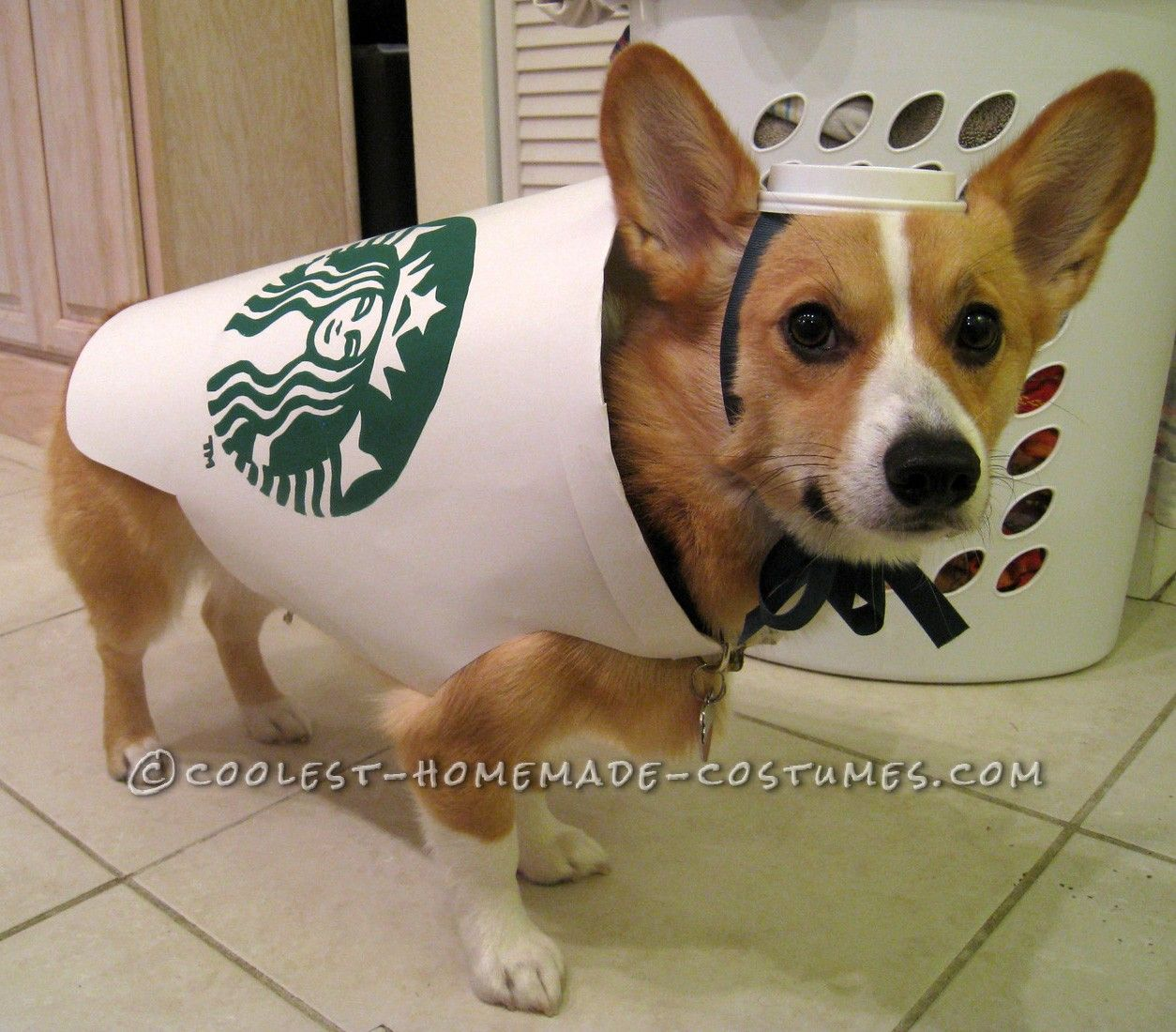 starbucks dog costume easy and inexpensive - How To Make A Dog Halloween Costume