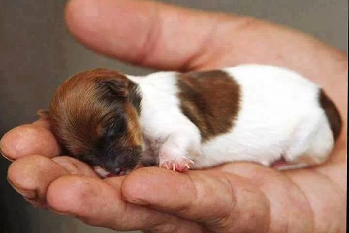 Tiny Puppy Cute Animals Cute Baby Animals Cute Dogs