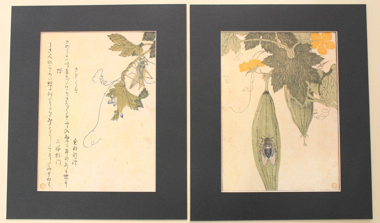 Kirigirisu (Grasshopper) Colour Plates by Kitagawa Utamaro ...