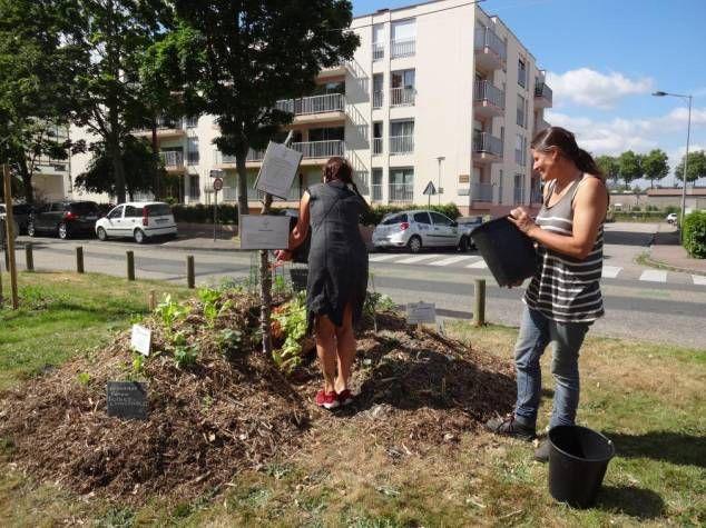 Rouen. Les Incroyables Comestibles plantent un mini-jardin ...