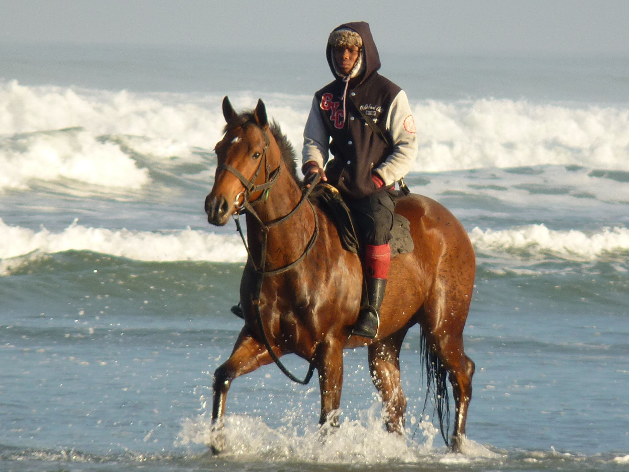 Beautiful race horse on the beach in cape town horses