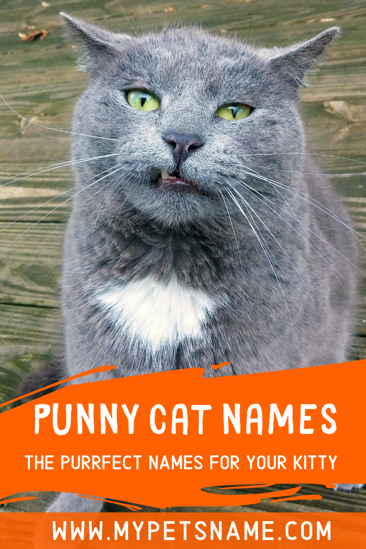 If you don't want a regular name for your cat, because he
