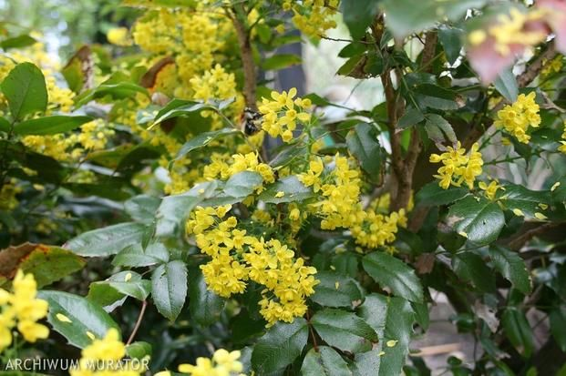 Kwiecien W Ogrodzie Jakie Rosliny Kwitna W Kwietniu Plants Garden Climates