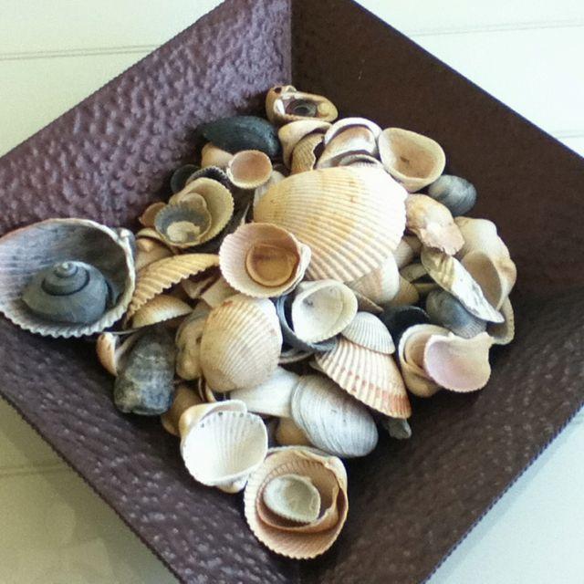 Gorgeous seashells.