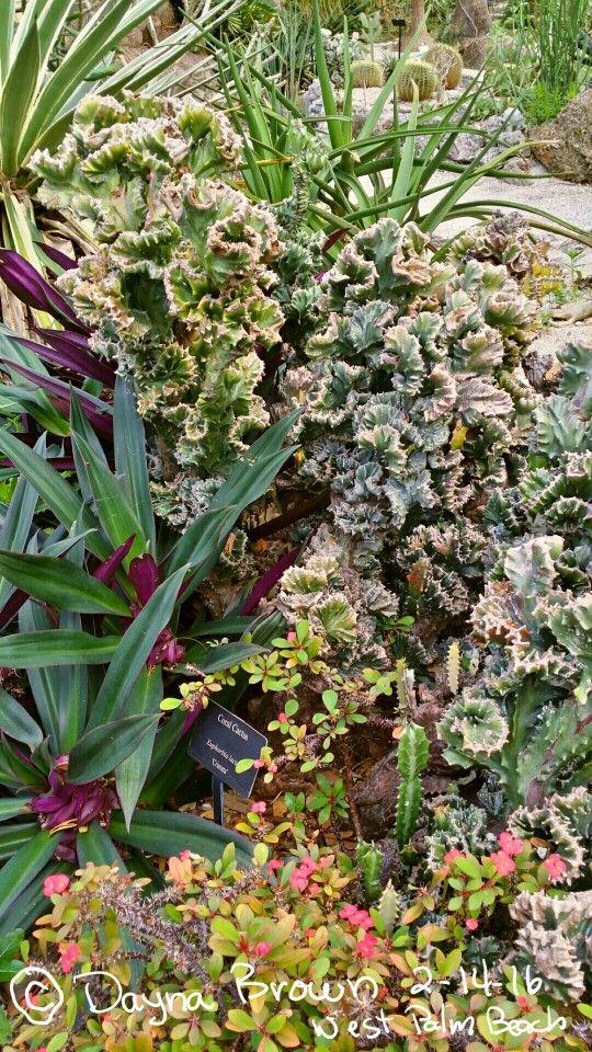 23bba94052e9efb112b793ab52230645 - Botanical Gardens West Palm Beach Fl