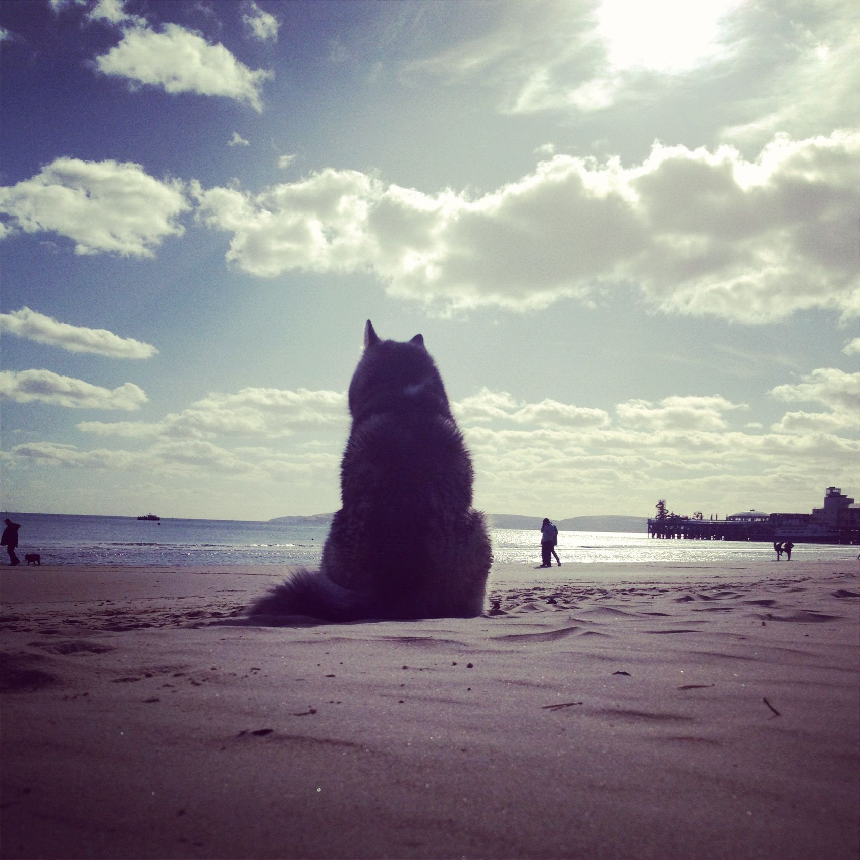 Beautiful Dog on a beautiful day at the beach.