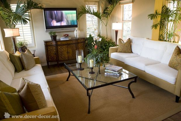 pictures of living rooms with palm tree decor | living room in the