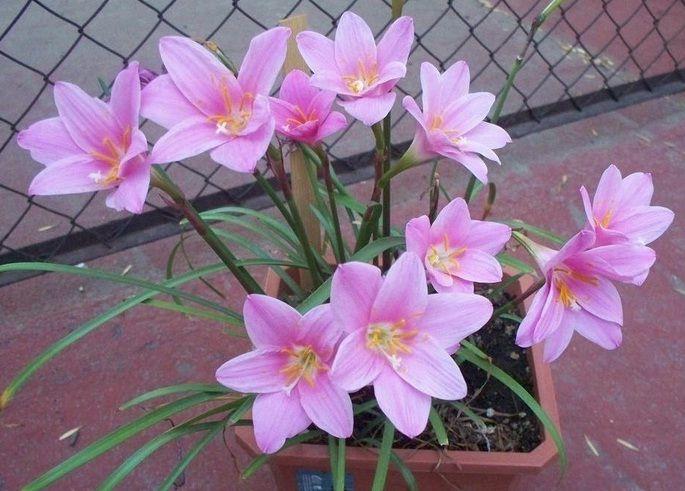 Daftar Nama Bunga Gambar Bunga Cantik Indah Unik Dan Langka Lengkap Dengan Penjelasannya Kumpulan Macam Macam Bunga Bunga Bunga Bunga Indah Gambar Bunga
